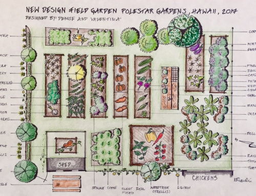 Permaculture at Polestar Gardens