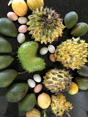 Hawaii Permaculture Sustainability Fruit Food