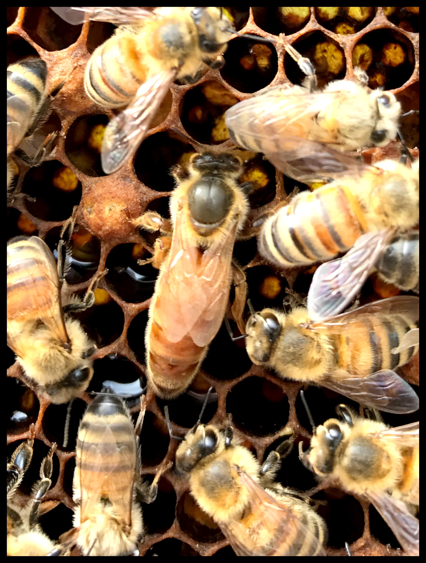 Beekeeping Hawaii